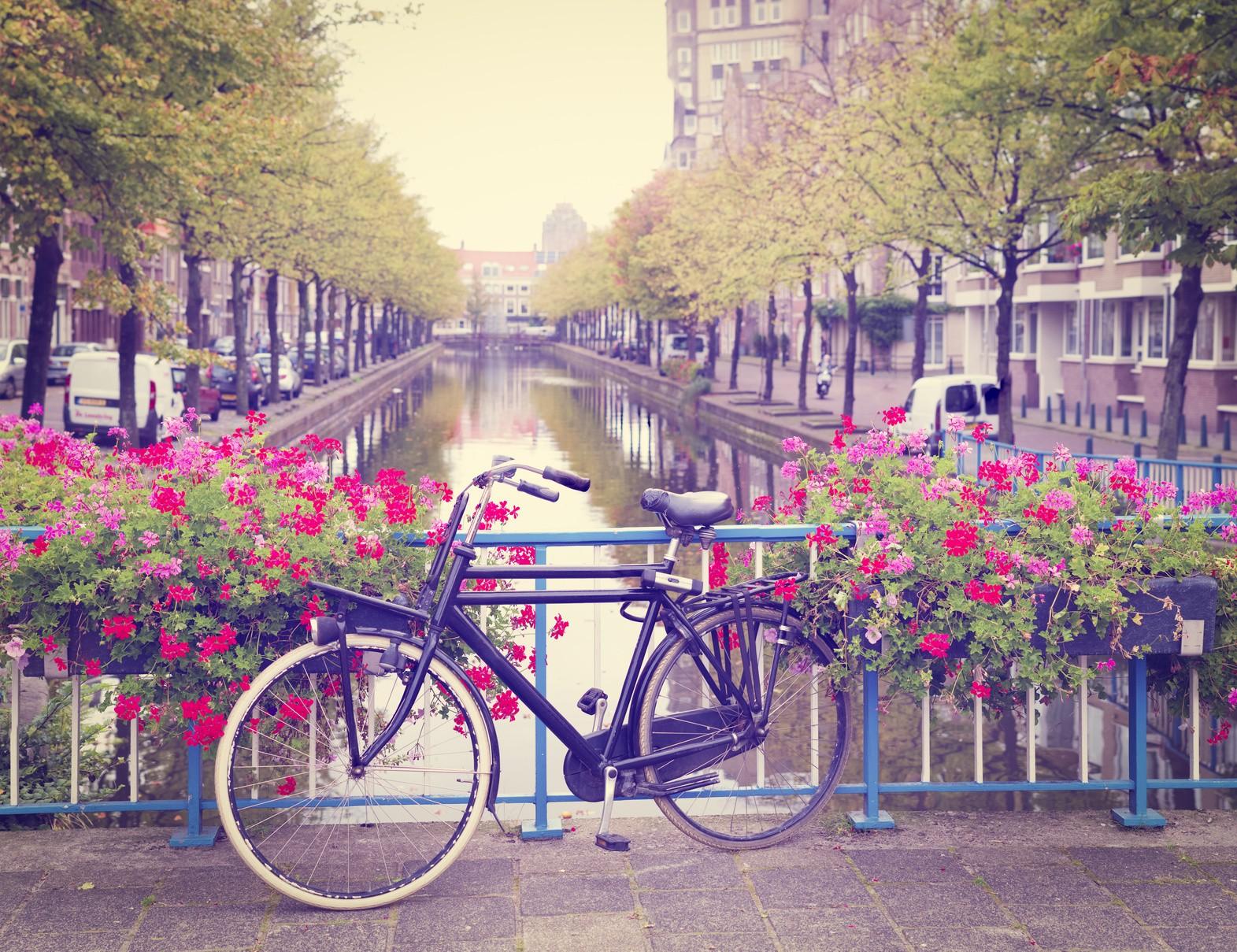 Niederländisch für Studium und Beruf – Intensivpaket